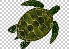 海龟背景,木头,植物,叶,爬行动物,瓷器,度假村,绿色,后院,瓷砖,动