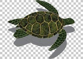 海龟背景,木头,爬行动物,Caretta,贝壳,瓷砖,院子,后院,陶瓷,马赛