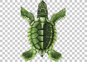 海龟背景,爬行动物,游泳,瓷砖,绿色,后院,瓷器,颜色,瓷砖,陶瓷,马