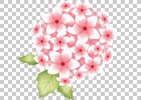 花卉背景,一年生植物,插花,花卉设计,切花,大丽花,植物,花瓣,粉红