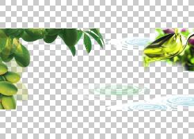 绿叶背景,绿色,水果,植物茎,黄色,植物,文本,食物,叶,橄榄油,海报
