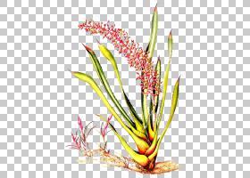 族的图形,草,线路,植物茎,分支,花卉,草族,花瓣,商品,植物群,植物
