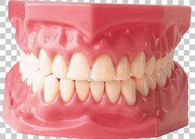 牙齿卡通,美容牙科,微笑,下颚,人嘴,假牙,错(牙合),口香糖,牙周病