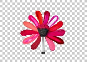 花卉剪贴画背景,非洲菊,洋红色,切花,雏菊家庭,花瓣,花,粉红色,嘴