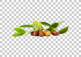 果树,植物,天然食品,食物,超级食品,水果,树坚果,澳洲坚果油,杏仁