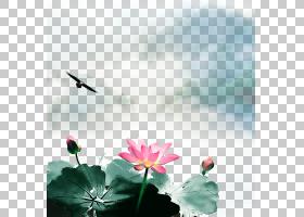 水彩花卉背景,天空,春天,冷静,花,神圣莲花,水,莲花族,水生植物,