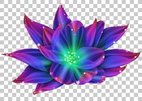 百合花卡通,洋红色,紫罗兰,花瓣,紫色,植物群,植物,水百合,睡莲,