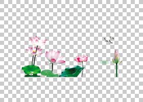 粉红色花卡通,草,插花,绿色,植物群,花卉,花,植物,粉红色,花瓣,睡