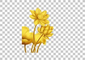 花卉剪贴画背景,植物茎,切花,植物,黄色,数据压缩,材质,花瓣,莲子