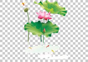 花卉背景,花卉设计,植物茎,绿色,植物群,神圣莲花,莲花族,水生植