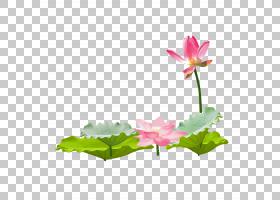 花卉背景,花卉设计,花卉,植物茎,植物群,神圣莲花,莲花族,水生植