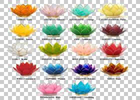 百合花卡通,塑料,材质,花瓣,植物,水百合,出生花,意义,蜡烛,窗玻