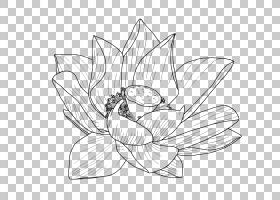 黑白花,机翼,传粉者,植物群,视觉艺术,黑白,花卉设计,线路,植物,