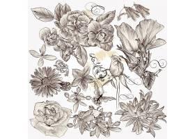 手绘清新植物玫瑰花装饰插画