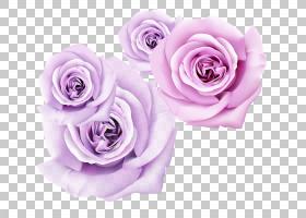 粉红色花卡通,花卉,花束,插花,蔷薇,切花,紫色,花卉设计,花瓣,薰