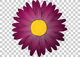 粉红色花卡通,非洲菊,洋红色,大丽花,紫罗兰,雏菊家庭,黄色,紫菀,