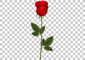 粉红色花卡通,红色,植物茎,花瓣,芽,蔷薇,花盆,玫瑰秩序,玫瑰家族