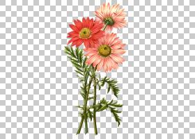 粉红色花卡通,非洲菊,花束,大丽花,插花,黛西,花卉设计,玛格丽特