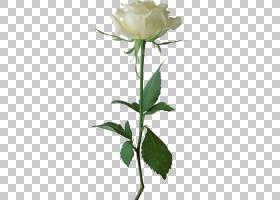 粉红色花卡通,芽,花卉,植物茎,花瓣,分支,花卉设计,花盆,玫瑰家族
