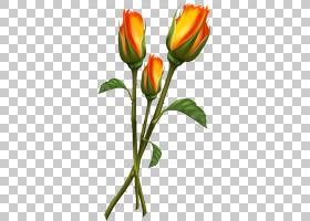 粉红色花卡通,芽,花卉,花束,植物茎,切花,种子植物,郁金香,黄色,