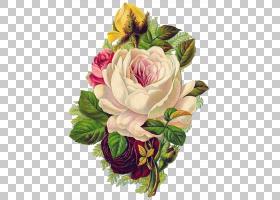 粉红色花卡通,花卉,插花,切花,蔷薇,玫瑰秩序,玫瑰家族,花园玫瑰,