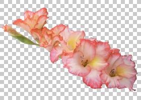 粉红色花卡通,草本植物,切花,花瓣,植物,虹膜家族,粉红色,花,存档