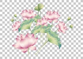 粉红色花卡通,花卉,插花,玫瑰,花,花卉设计,花瓣,玫瑰家族,玫瑰秩