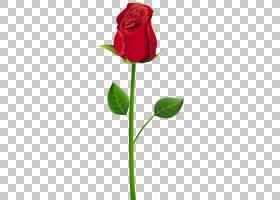 粉红色花卡通,花卉,植物茎,芽,切花,植物群,郁金香,花卉设计,玫瑰