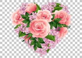 粉红色花卡通,花卉,粉红色家庭,一年生植物,插花,切花,floribunda