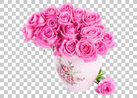 粉红色花卡通,花卉,粉红色家庭,洋红色,插花,切花,floribunda,蔷