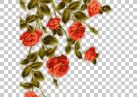 族的图形,粉红色家庭,人造花,蔷薇,玫瑰秩序,花瓣,玫瑰家族,植物,