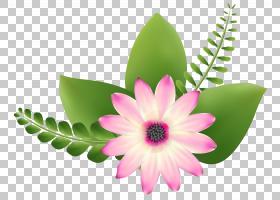 粉红色花卡通,花卉,花盆,花瓣,植物,粉红色,粉红色的花,切花,花卉