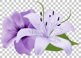 粉红色花卡通,花卉,莉莉,植物群,花瓣,植物,红色,丁香,粉红色,玫
