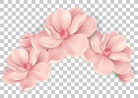 樱花背景,发饰,鞋,樱花,桃子,开花,花瓣,切花,花束,水彩画,玫瑰,