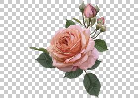 粉红色花卡通,花束,花卉设计,桃子,插花,花卉,花瓣,植物,floribun