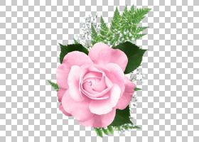 粉红色花卡通,草本植物,花卉,花束,粉红色家庭,蔷薇,切花,floribu