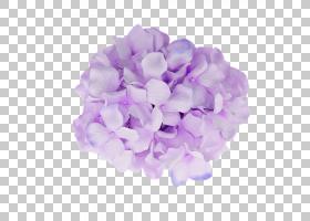 粉红色花卡通,薰衣草,丁香,绣球花,花瓣,切花,科纳莱斯,蓝玫瑰,颜