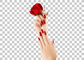 背景家庭日,手指,嘴唇,手,手型,花瓣,玫瑰家族,花园玫瑰,指甲护理