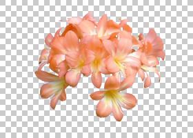 粉红色花卡通,切花,粉红色的花,玫瑰,颜色,粉红色,花瓣,橙色,开花