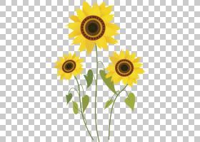 族的图形,花卉设计,花瓣,切花,黄色,花卉,雏菊家庭,向日葵,植物,