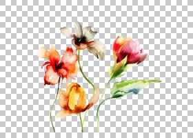 春季抽象背景,芽,花卉设计,植物茎,插花,切花,蛾兰,静物摄影,郁金