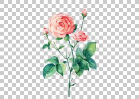 水彩花卉背景,花卉,植物茎,蔷薇,切花,植物群,插花,花卉设计,水彩
