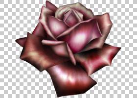 粉红色花卡通,关门,玫瑰秩序,玫瑰家族,花瓣,粉红色,阿凡达,IMVU,