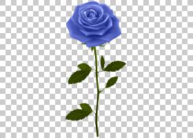 粉红色花卡通,植物茎,植物群,蔷薇,玫瑰家族,玫瑰秩序,植物,绿色,