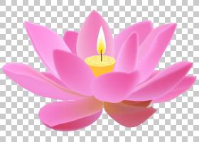 粉红色花卡通,洋红色,关门,神圣莲花,莲花族,水生植物,Proteales,