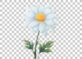 花卉剪贴画背景,非洲菊,一年生植物,牛眼雏菊,植物茎,黛西,玛格丽
