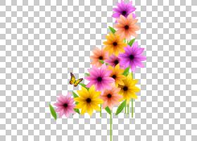 花卉剪贴画背景,非洲菊,一年生植物,野花,插花,黛西,花卉设计,花