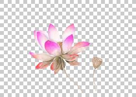黑白花,木兰科,切花,水生植物,植物,粉红色,花瓣,颜色,铅笔,黑白,
