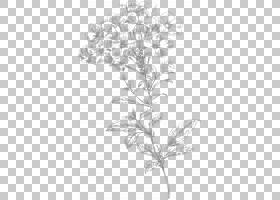 黑白花,线路,植物茎,分支,植物群,树,视觉艺术,植物,花瓣,花卉设