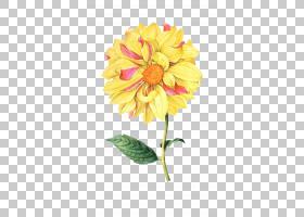 粉红色花卡通,花卉,花束,插花,切花,雏菊家庭,非洲菊,花卉设计,黄